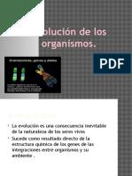 Presentación1 evolucion humana.pptx