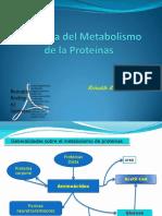 isiologia-del-Metabolismo-de-la-Proteinas.pdf