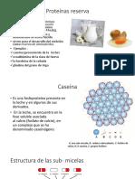 Proteínas reserva.pdf
