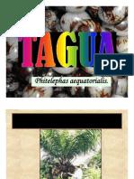 TAGUAECUADOR