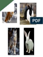 animales conejos zorro lobo.pptx