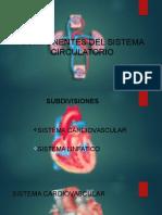 Componentes Del Sistema Circulatorio
