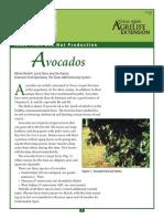 Avocados 2015