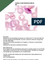 Toxosplasmosis Clase