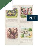 Animale-din-continente-v2x2.pdf