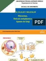 Ribosomas, RE, AG.pptx