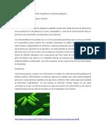 Alteraciones de Los Cultivos Vegetales Por Bacterias Patógenas