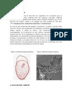 OTRAS-amebas-y-definicion-de-miasis.docx-572682432.docx