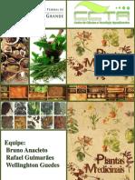 plantasmedicinais-130728135816-phpapp02