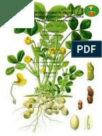 Proyecto de Agricola (MANI)