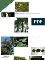 Nama Pohon Dendro