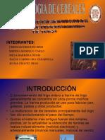Equipos e Instalaciones de Una Planta de Procesamiento de Trigo