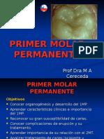 Primer Molar Permanent