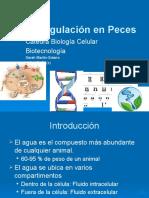Agua y Regulación Osmotica Peces 26-30 Ene 2015