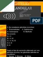 2. TEJIDO GLANDULAR.pptx