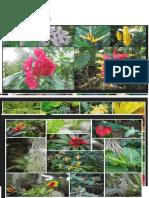 Flora Serbas Tropicales