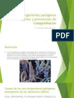 Microorganismos Patógenos Emergentes y Prevención de Campylobacter
