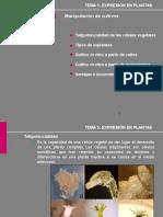 agrobacterium y resto de diapos 2.pptx