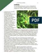 Plantas Selváticas Medicinales - Tithonia diversifolia