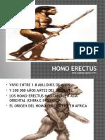 Homo Erectus Biologia