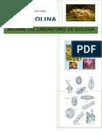 BIOLOGIA GENERAL- PRACTICA N°9-F3-DIVERSIDAD DE LA VIDA EUBACTERIAS, PROTISTAS Y HONGOS