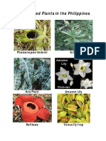 endangered plants in the phil.pdf