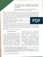 USO DE HABITATS NATURAIS Ε ANTROPICOS PELOS ANUROS EM UMA LOCALIDADE NO ESTADO DE RONDÔNIA, BRASIL (AMPHIBIA