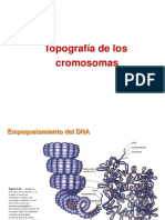 Topografia de Los Cromosomas