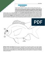 Pomacentridae.pdf