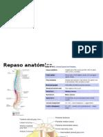 Repaso Anatomico Medula