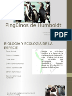 Pinguinos de Humboldt