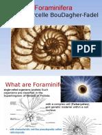 Benthic Foraminifera