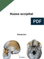 Hueso Occipital 2014