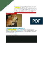 LINK PARA EL TRABAJO DE MERCADOTECNIA.docx