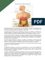 FISIOLOGIA DEL APARATO DIGESTIVO.docx