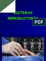 13. Sistema Reprodutores