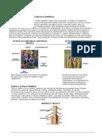 Sistema Nervoso Central e Autônomo