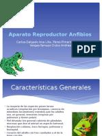 Aparato Reproductor en Anfibios