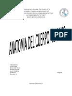 ANATOMIA DEL CUERPO HUMANO(Trabajo de Educacion Fisica)
