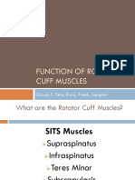 function of rotator cuff muscles updated