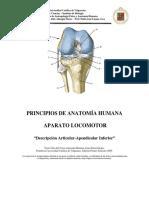 Descripcion Sistema Articular Apendicular Inferior 2009