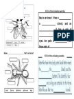Worksheet bi year 4 insect