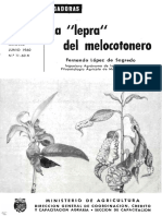 La Lepra Del Melocotonero