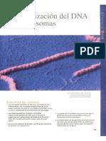 La organización del DNA en cromosomas