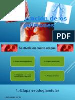 Respi-Embrio