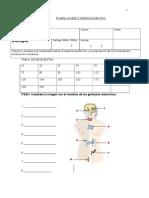 Prueba-sistema Endocrino 2 Medio