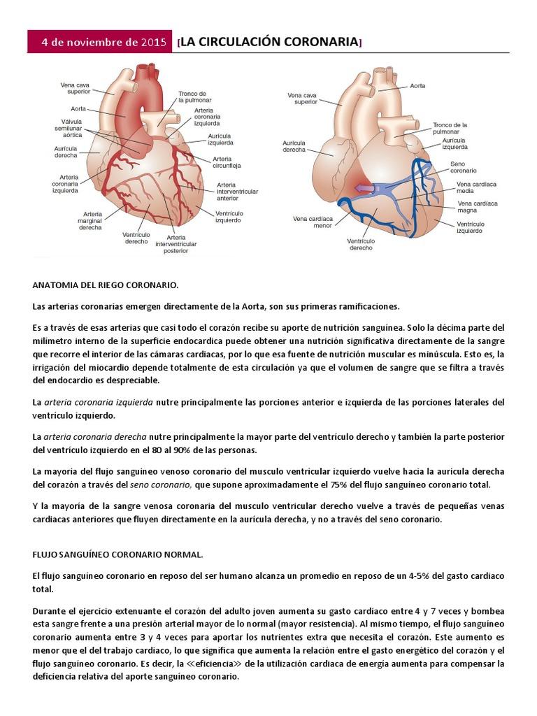 Circulacion coronaria.