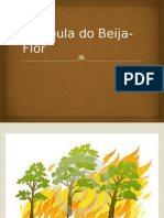 A Fábula Do Beija-Flor