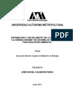 UAMI15492 Aves Xochi