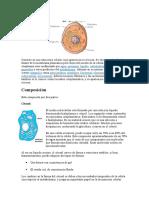 El Citoplasma Biologia
